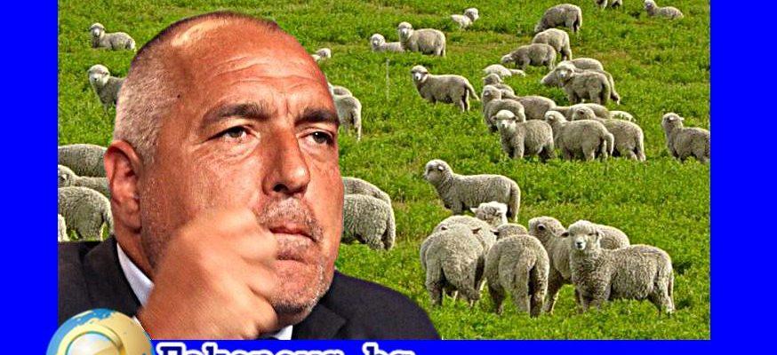 Истина или не! Бойко Борисов вече не се търсят овчари