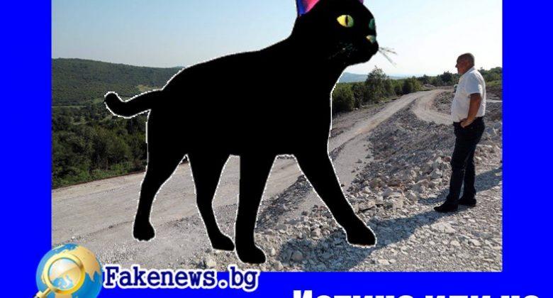 Истина или не! Евтаназия на всички черни котки в страната ще поиска Борисов !
